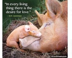 Animal Quotes, Animal Rights Religions's photo: Farm Animals, Animals And Pets, Cute Animals, Strange Animals, Beautiful Creatures, Animals Beautiful, Stop Animal Cruelty, Tier Fotos, Animal Quotes