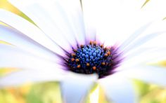 A single flower wallpaper flowers nature wallpapers for free