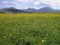 Both North and South Uist are just beautiful. I love the wild flowers in the Machair. It's beautiful to ride around and camp there.     machair and the south uist hills from howmore, July 2005 by Hugh Spicer, via Flickr