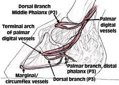 Understanding the Venogram