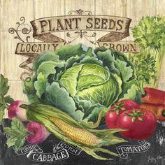 Our Farm - Cabbage (Geoff Allen)