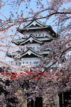 「弘前城桜物語」 まだまだ間に合います!東北はいま満開中!!弘前城のあとは世界一桜並木へようこそ~  WAO~還来得及!日本東北的桜花正盛開中、青森的看了弘前城桜花之後、歓迎来到世界第一的桜並木~