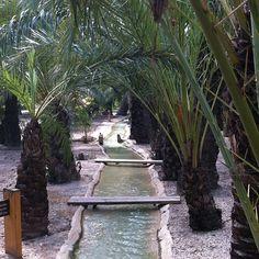 Acequias en Huerto San Pl�cido #palmeral #elche #visitelche #patrimoniohumanidad