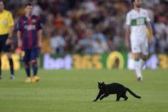 Un chat noir interrompt le match Barça-Elche ! - http://www.actusports.fr/116237/chat-noir-interrompt-match-barca-elche/