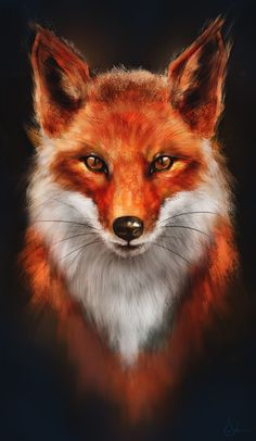 Beautiful fox drawing