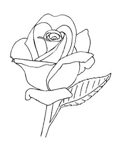 Rose Lineart by groundhog22.deviantart.com on @deviantART