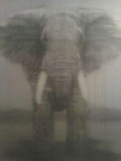 Elephant, oil on canvas, Alison Van Pelt