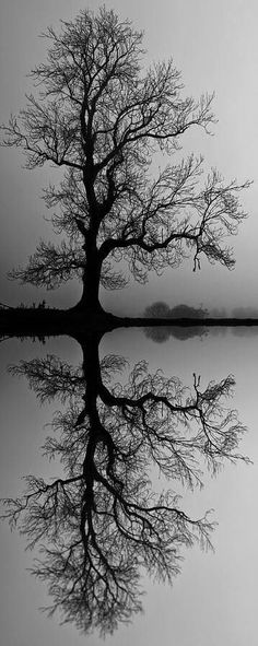 Passing Life, Amazing Reflection | Nature Board