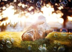 Jessica Drossin: 21 тыс изображений найдено в Яндекс.Картинках