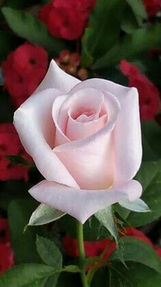 A rose for the New Year...and always love.