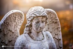 Love And Light, Light In The Dark, Garden Sculpture, Lion Sculpture, Angel Statues, East Tennessee, Angels In Heaven, Dark Places, Cemetery