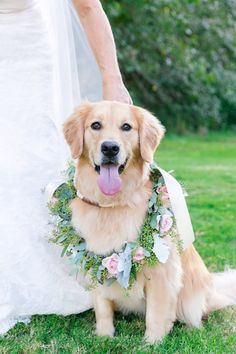 No one is happier than this pup right now! Colorful Charleston Wedding