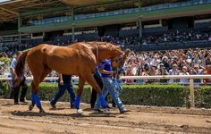 4436 Best The Great Racers Images In 2019 Horse Racing