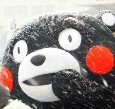 Kumamon in the snow! Meme Pictures, Reaction Pictures, Photography Themes, Cute Characters, Spirit Animal, Funny Cute, Aesthetic Pictures, Funny Images, Art Drawings