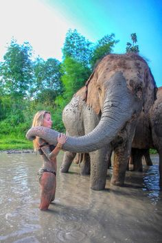 How to Find Ethical Elephant Sanctuaries in Chiang Mai Pictures of Thailand Thailand photography Thailand pics Thailand bucket list Thailand destinations, Thailand travel guide, things to see in Thailand, Thailand places to see, whe Thailand Destinations, Thailand Travel Guide, Visit Thailand, Backpacking Thailand, Travel Destinations, Holiday Destinations, Elephant Sanctuary Thailand, Thailand Elephants, Elephant Nature Park