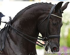 The Double Bridle: An Instrument of Understanding - excellent article / eurodressage