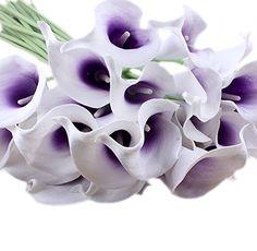 Calla lila »–› PreisSuchmaschine.de