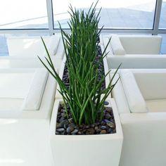 Troughs - Eco Green Office Plants Plant Troughs, Inside Garden, Green Office, Eco Green, Office Plants, Balcony Garden, Cube, Planter Pots, Roof Terraces