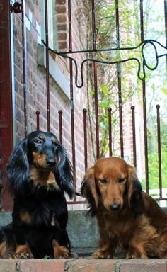 Oh my, I love the gate! And the doxies are cute too. ;) (via Crusoe the Celebrity Dachshund)