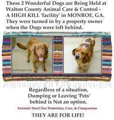 Regardless of the situation, they were abandoned & are now in a KILL SHELTER. That should never even be an option! Their lives are in danger now because somebody couldn't be bothered to take the time to find them a home. Nothing you say can justify that, sorry.  BUZZ & CAMILIA WALTON COUNTY ANIMAL CONTROL - A HIGH-KILL SHELTER IN MONROE, GA!! https://www.facebook.com/friendsofwcac/photos/a.147077982056102.28931.147067788723788/756597361104158/?type=1&comment_id=758186470945247&notif_t=like