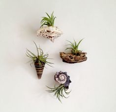 Magnet Plants on Pinterest | Magnets, Air Plant Terrarium and Corks