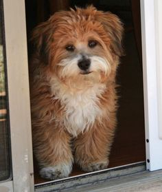 Benji the Poodle Mix Pictures 915769-Aw how sweet!