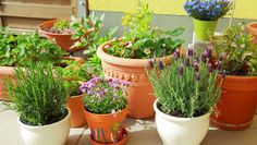 How To Urban Garden Square Foot Gardening: How To Plan Your New Vegetable Garden Best Herbs To Grow, Growing Herbs, Growing Flowers, Planting Flowers, Herb Garden In Kitchen, Kitchen Herbs, Kitchen Gardening, Herbs Garden, Garden Planters