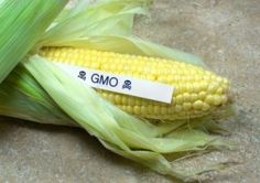 The Fight for #GMO Labeling: Barking Up the Wrong Tree?  Another good reason to grow your own food?   http://www.naturesfootprint.com/culti-cave