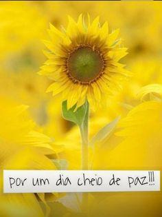 Amarelo como Sol.... BOM DIA!!!
