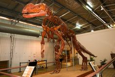 Full-sized replica of the famous Muttaburrasaurus; Flinders Discovery Centre, Hughenden, Queensland.... - Provided by Lonely Planet