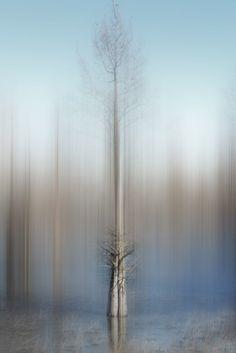 By Ellen Jantzen Dark Photography, Abstract Photography, Artistic Photography, Photography Tutorials, Photography Ideas, Abstract Landscape Painting, Landscape Paintings, Dark Tree, Creative Landscape