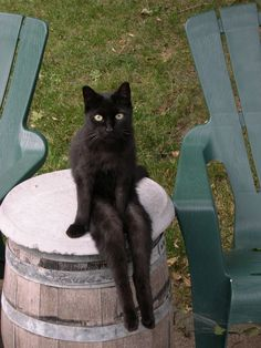 Smart looking black cat sitting on a barrel. Why Doncha' Come Up And SEE Me Sometime I Love Cats, Crazy Cats, Cool Cats, Baby Animals, Funny Animals, Cute Animals, Animal Memes, Tier Fotos, Cat Sitting