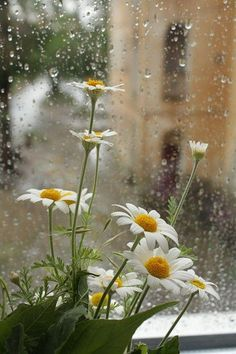 Rainy Days and blooming sunshine ❤️ Rainy Day Photography, Rain Photography, White Photography, Landscape Wallpaper, Nature Wallpaper, Flowers Nature, Beautiful Flowers, Rain Wallpapers, Phone Wallpapers