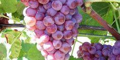Pourquoi aimez-vous le Banyuls... Vous avez apprécié ce vin rosé solide, fruité, minéral... quels autres vins pourriez-vous apprécier ?