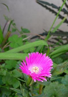 jardin exteriores imagenes : Flores y Disculpas...Rayito de Sol