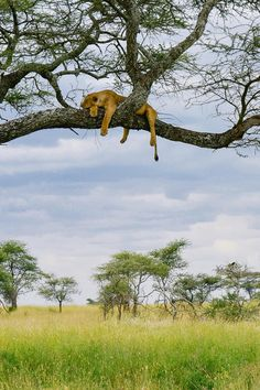 A Self-Drive African Safari through Lake Manyara, Ngorongoro & The Serengeti in Tanzania