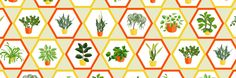 Easy-to-grow indoor plants that thrive