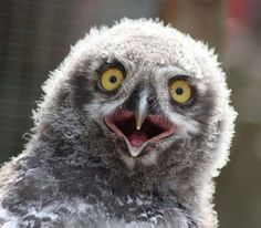 What's your best caption for this owl?