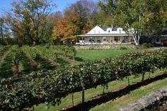 Gilmanton Winery And Vineyard in New Hampshire is a great place to spend a day wandering the fields, sipping wine, and enjoying beautiful views. Great Places, Places To See, Need A Vacation, New Hampshire, Vermont, Day Trips, The Great Outdoors, New England, Places To Travel