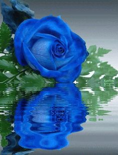 Flowers, Animated Gif, Roses, Animated Gifs, Beautiful Flowers, Flores, Animated Graphics, Keefers photo 741f7495.gif