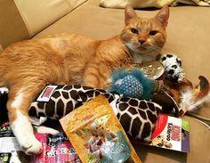 """Jag har fått g o d i s och nya l e k s a k e r !  I've got c a n d y and new stuff to p l a y with!  #kattbox #catsofworld #catsofinstagram #katt #cats_of_instagram #catslife #cats #catstagram  #catslover #catsoftheday  Här kan du köpa din egen kattbox:  http://kattbox.se/?ref=396  Uppge koden """"ENZO15"""" så får du 15% rabatt!  Källa: https://www.instagram.com/p/BF4P9Tgl7yT/"""