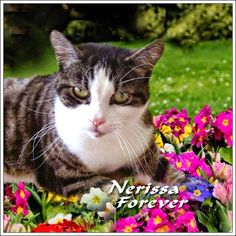 DOLLY PAWCIRCLE Pawlease observe a minute of silence for buddhaful Nerissa. She was one of my #DollyBesties and I shall never forget her ❤ Dolly