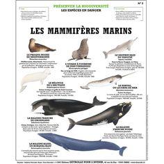 Les Mammifères marins - Deyrolle