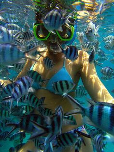 This is exactly what happened to me in Hawaii! Our snorkeling tour guide threw bread crumbs in and I was surrounded!