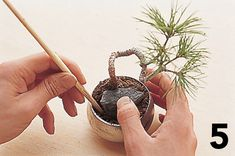 Build a miniature landscape with Keshiki Bonsai--a step-by-step tutorial.