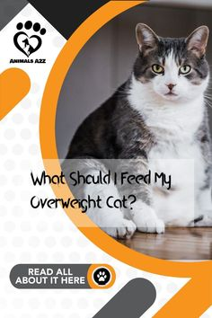 Here's the best cat food of your cat is obese! Get more information at AnimalsA2Z.com. Cat Diet, Best Cat Food, What Cat, Lose Weight, Weight Loss, Cat Feeding, Lose Body Fat, What Can I Do, Weight Management