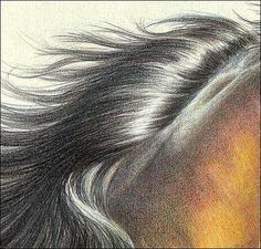 Drawing hair in colored pencil - Tips apply to human hair and animal hair.