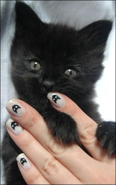 Cute kitty and nails!