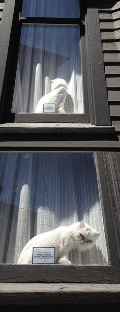 """""""My girlfriend saw this cute kitty in the window, so she tapped on it to get a better look."""" Hahahahaha"""