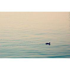 【ayupa_pa】さんのInstagramをピンしています。 《・ ・ 海に鴨😳 ・ とても静かな朝でした☺️ ・ ・ 夏休みの思い出 朝の散歩編終了です♬ ・ まだまだ続くので あしからず😣🙏🏻 ・ #しまばら #島原外港 #鴨 #海に鴨 がいた!しかも#アベックで #2羽 #ゆるり #海 #癒し #sea #duck #shimabara #japan #nature #naturelovers ・ こちらの地区はちょっと早めに夏休みが終わって、学校が始まりました。 ウチの長男くん「絶望だ」とな😂 毎朝すんごい表情で「無言😑」…そんな長男を励まそうと思ってね、今朝「ゴッホより♬普通〜に♬ラッセンが・すっき〜〜♬👯」って、髪をかき上げる動作まで真似て踊ったのに ・ 👦🏻👧🏻👶🏻…みんな無言。無表情だったわ💔 絶対面白いのに〜〜( ;´Д`)なんで笑ってくれなかったんだろ😭母切ない。 今度、この面白さを動画でpostしようかな?🤔いや、嘘!💦 でも、絶対面白いって!笑 ・ 芸人永野さん結構好きです(笑)#永野ポーズ #永野中毒…